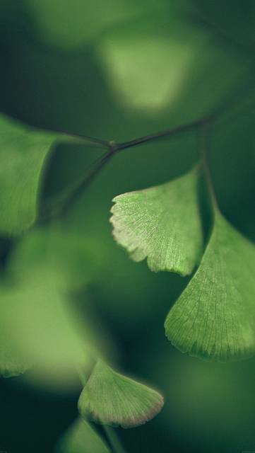 mf56-good-luck-clovers-leaf-nature