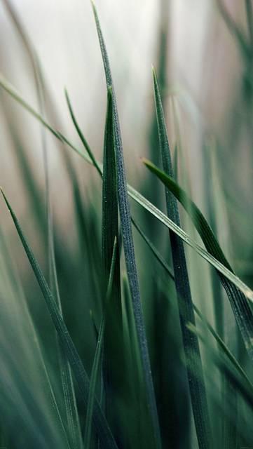 mf52-grass-world-garden-leaf-nature