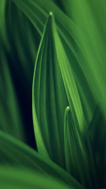 md76-leaf-nature-green
