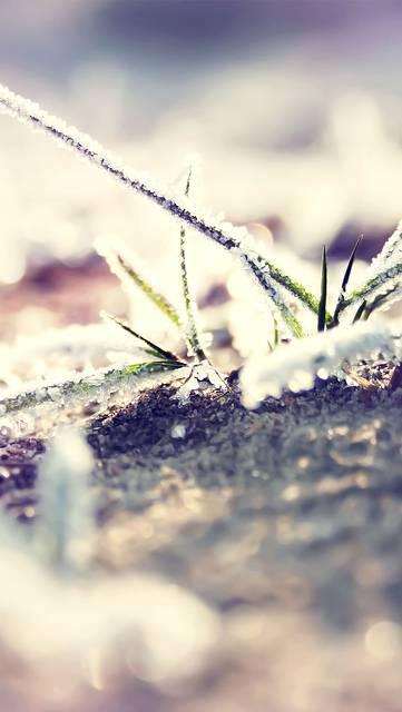 mb61-wallpaper-bo0xvn-1-II-snow-flower