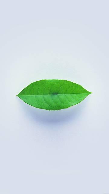 ah89-green-leaf-minimal-nature-art