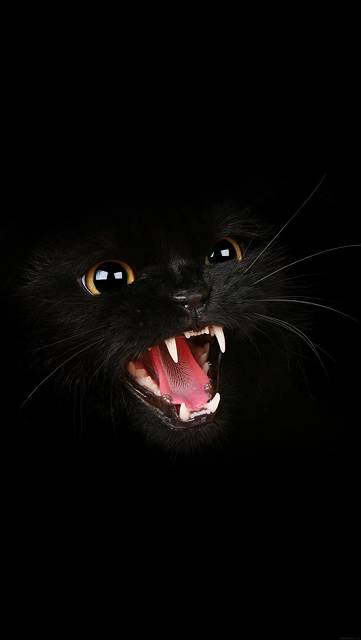 mj54-black-cat-roar-animal-cute