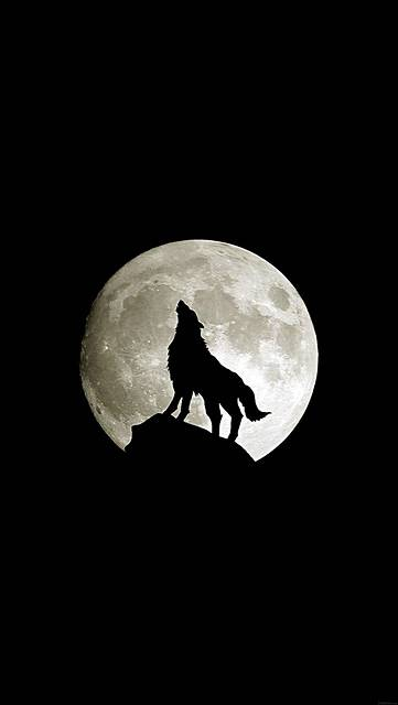 ma32-wolf-howl-animal-dark-minimal-nature