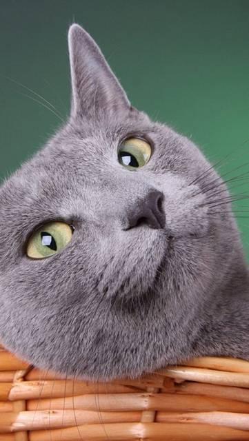どや顔で見つめる猫の可愛い壁紙