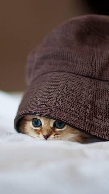 帽子の中に隠れる子猫の可愛い壁紙
