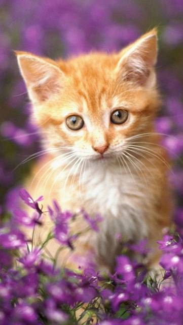 花と子猫の綺麗な写真壁紙