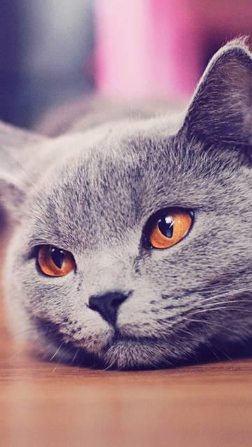 床に顔を付ける猫のおしゃれな写真