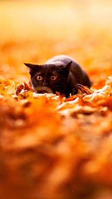落ち葉と黒猫の綺麗な壁紙画像