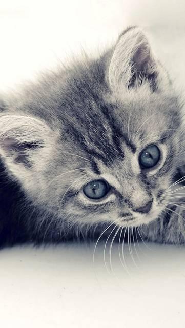 きょとんとした表情の子猫