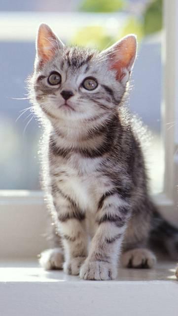 窓辺に座る子猫の写真壁紙