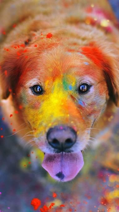 カラフルなペンキのついた犬
