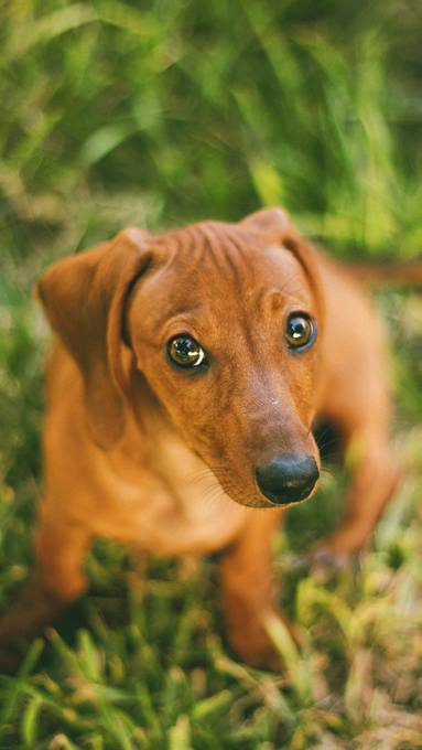 芝の上の犬の可愛い壁紙