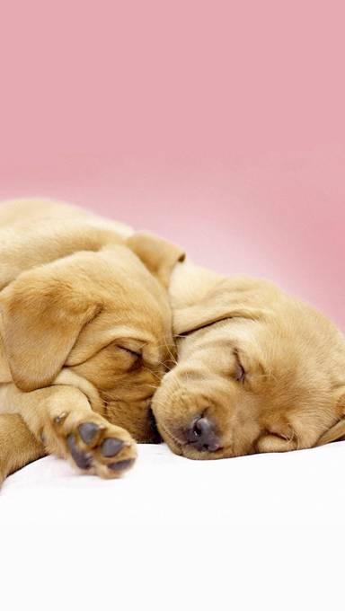 仲良く眠る仔犬の写真壁紙