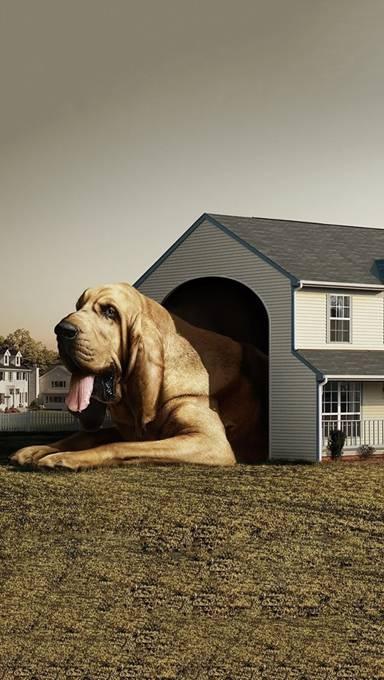 巨大な犬小屋に入った犬