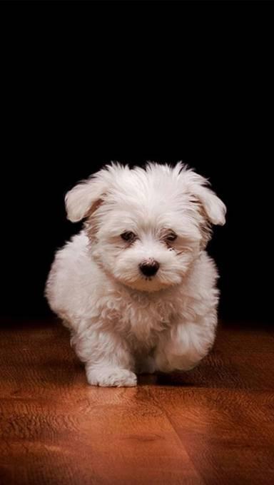 よちよち歩く子犬の壁紙画像
