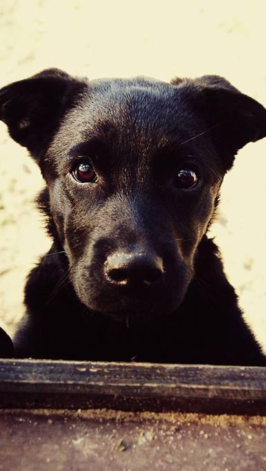じっとこっちを見つめる黒い犬