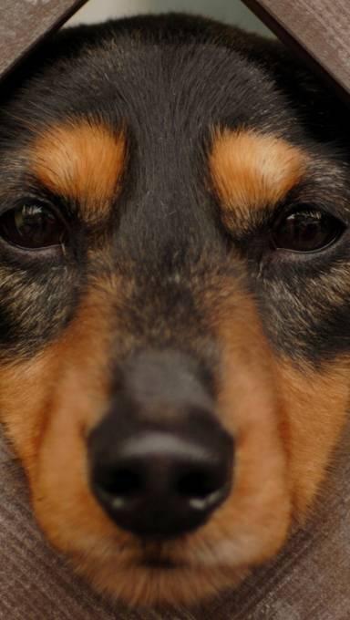 カメラ目線な子犬のアップ