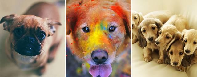 【iPhone6/Plus壁紙】かわいい犬画像集