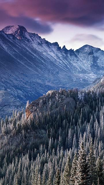 雪の森の向こうに見える山の写真