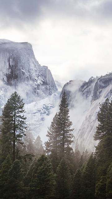 大きな木と雪山の綺麗な写真