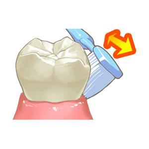 歯の磨き方 - 歯の磨き方 バス法