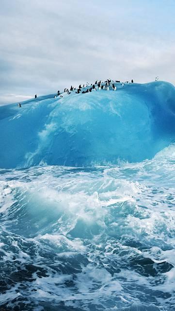 海の波とペンギン達の写真