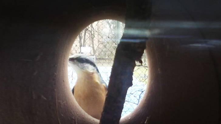 家の中から鳥の姿が覗ける!