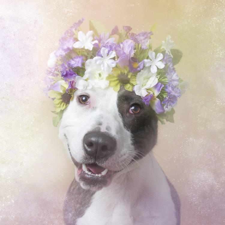 花の冠で着飾ったオシャレな犬たち - 01