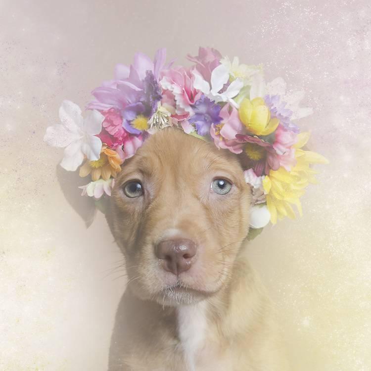 花の冠で着飾ったオシャレな犬たち - 02