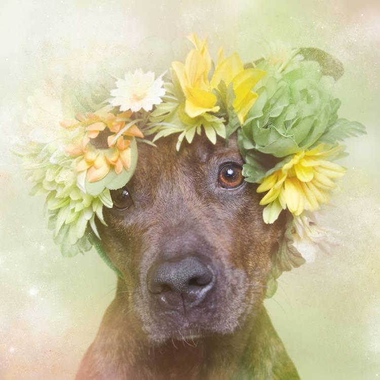 花の冠で着飾ったオシャレな犬たち - 04