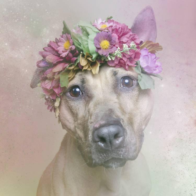 花の冠で着飾ったオシャレな犬たち - 05