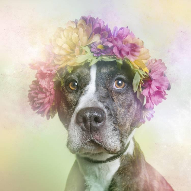 花の冠で着飾ったオシャレな犬たち - 06