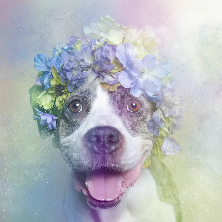 花の冠で着飾ったオシャレな犬たち - 07