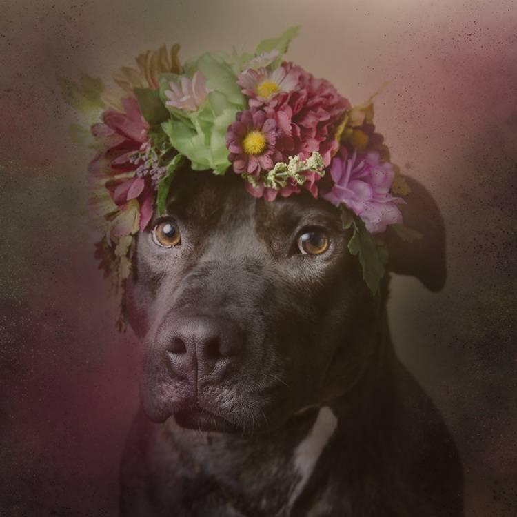 花の冠で着飾ったオシャレな犬たち - 08
