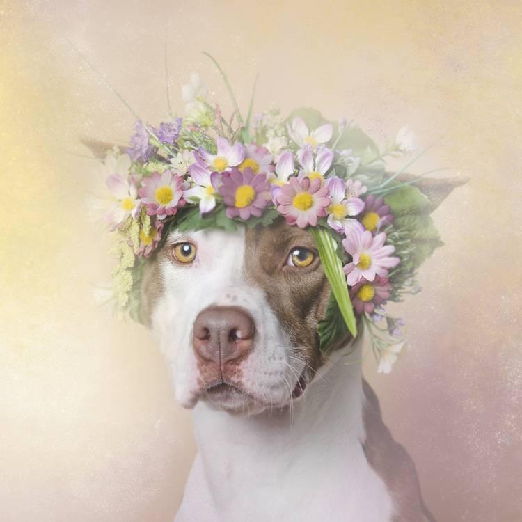 花の冠で着飾ったオシャレな犬たち - 09