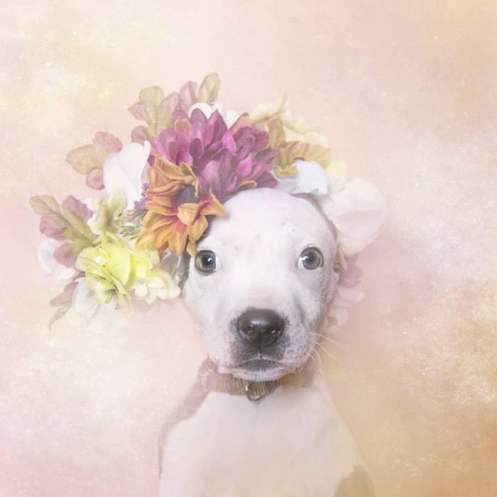 花の冠で着飾ったオシャレな犬たち - 10