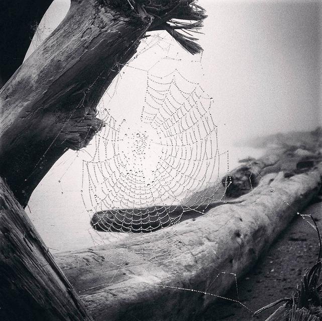 自然写真部門 第一位
