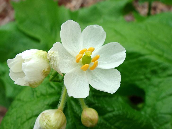 普段は普通の白い花